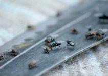 Tips Jitu Usir Lalat Dari Rumah Dengan Mudah Dan Efektif